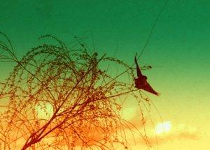 bird flies from willow tree