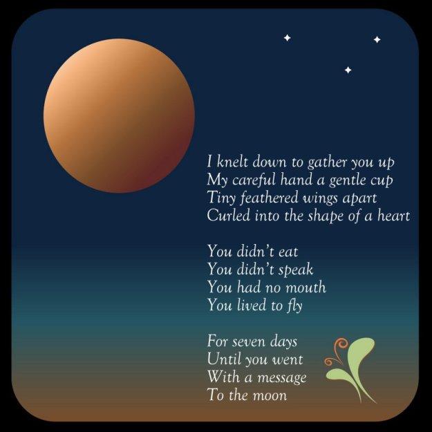 "Poem ""Fly"""