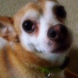 Reggie dog May